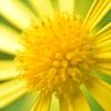🌻一眼レフ D750+接写リングで近所の花を最大拡大で撮影しました。