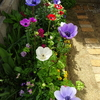 ミモザ・ガーデンの日記 今年の庭の花