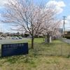 ✧٩(ˊωˋ*)و✧図書館へ桜を見に来ませんか???