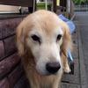 私が、犬の文章を書き続けている理由 ~1周年を迎えたWithdogとWithcat~