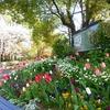2020年4月の交差点花壇のハイライト