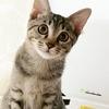 人が大好きな子猫のふうちゃん 10/25(日)保護猫譲渡会参加予定