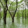 白川ダム(白川湖体験巡視)