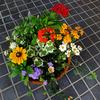 夏花の寄せ植え 〜わが家の花たち〜