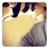 真夜中のブログ更新と猫