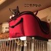 猫のアトム- 僕のお気に入りの場所