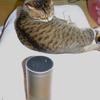 【AI(エーアイ)スピーカー】Amazon Echoが来た!