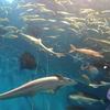 静岡県水産・海洋技術研究所浜名湖分場 浜名湖体験学習施設ウォット
