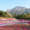 羊山公園の芝桜!開花の様子と入園料・営業時間・駐車料金・混雑の詳細!