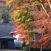 湘南四季の花-Autumn-