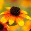 服部緑地へ久しぶりに夏の花を撮りに行きました