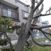 初めての函館旅行、春、3日目。
