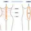 【追記有り】産後のケア② 腹直筋離開防止と下半身筋トレ