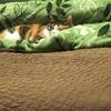 話題のハッシュタグ「#全日本猫伸ばし協会」