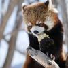 「札幌でしかできない50のこと」全部行ってみた。円山動物園③