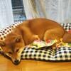 新しいベッドに慣れてきた!