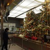 金沢駅に雪吊りクリスマスツリーを発見