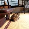 【京都】『河井寛次郎記念館』に行ってきました。 京都観光 京都旅行 女子旅 主婦ブログ