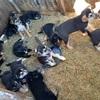 子犬14匹を保護しました