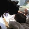 黒猫りぃちゃんは 孫の雪ちゃんが大好き