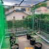 森バナ農園2020 (2) 『植え付け』