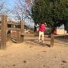 幼稚園あとは毎日公園。