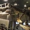 恐竜の化石が観たいの!国立科学博物館に行ってきました~常設展編
