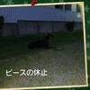 Today's Dog - Goal 目標