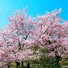 〈池田大作先生 四季の励まし〉 我ら創価の春が来た! 2019年3月31日