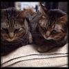 ミッションコンプリート 診察日|特発性過眠症と猫と
