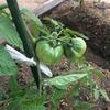 家庭菜園で、もう育てて行く自信がない