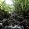 〈個人山行〉台高の沢 蓮川水系 ヌタハラ谷