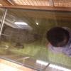 """【0歳7ヶ月】赤ちゃんと行く国立科学博物館のオススメルート。親と子の探検ひろば""""コンパス""""は外せない!"""