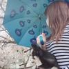 桜と傘とわんこ