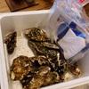 三陸牡蠣パーティー