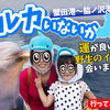 "Tour to go to see wild dolphins in Aomori!!""A tour that may have dolphins"""