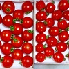 竜王から無農薬野菜のふるさと便