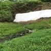 白馬五竜高山植物園と地蔵の頭へ行ってきたよ(2017梅雨)