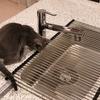 これで決着?猫とのキッチンをめぐる攻防戦