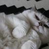 iphoneのカメラロールから猫の写真が消えた!でも満足!
