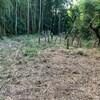昨日の朝は『竹との戦い!』