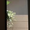 5月28日 茅ヶ崎にて猫さま歩き とその情景