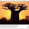 山の自然学カレンダー2021 9月・夕日のバオバブ