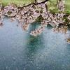 有機肥料をまいたことと畦畔の草刈りと久しぶりの雨と散りはじめた桜