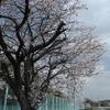 雲フェチの昼休み~その13①『春の雲達』