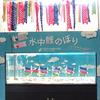 2018/4/26 テーマ水槽「水中鯉のぼり・コイの仲間が集合!」