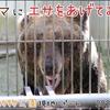 【レポ#15】ヒクマにエサをあげられる!東武動物公園現地レポート(2020/11/14)【動物園】