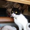 今日の黒猫モモ&黒白猫の動画-1043
