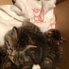 【地域猫】vol.14 台風直撃前に、赤ちゃん保護できました♪