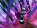 緑豊かな街中のオアシス。北海道大学植物園で植物と昆虫撮影